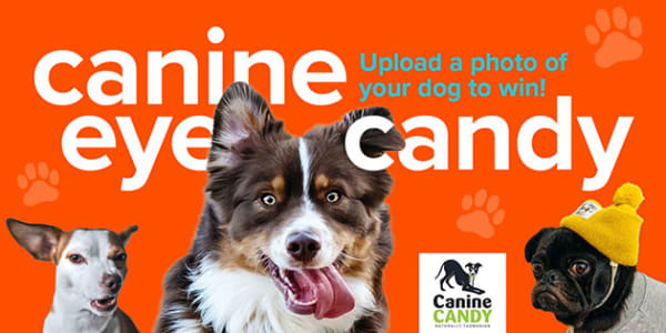 Canine eye candy slider 630x315