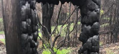 South Coast Bushfires: One Year Anniversary