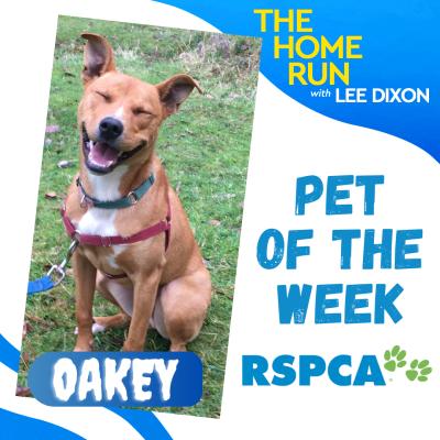 Pet of the week: Oakey