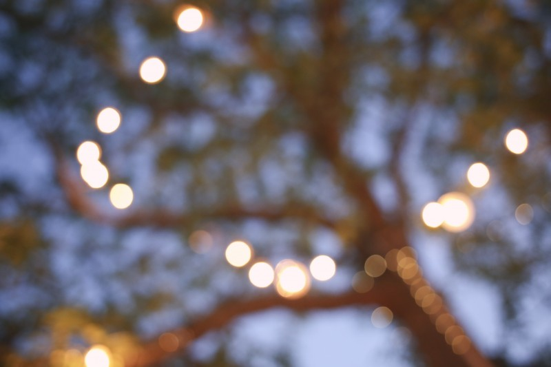 Decorative Lights in Trees at Surf Lodge