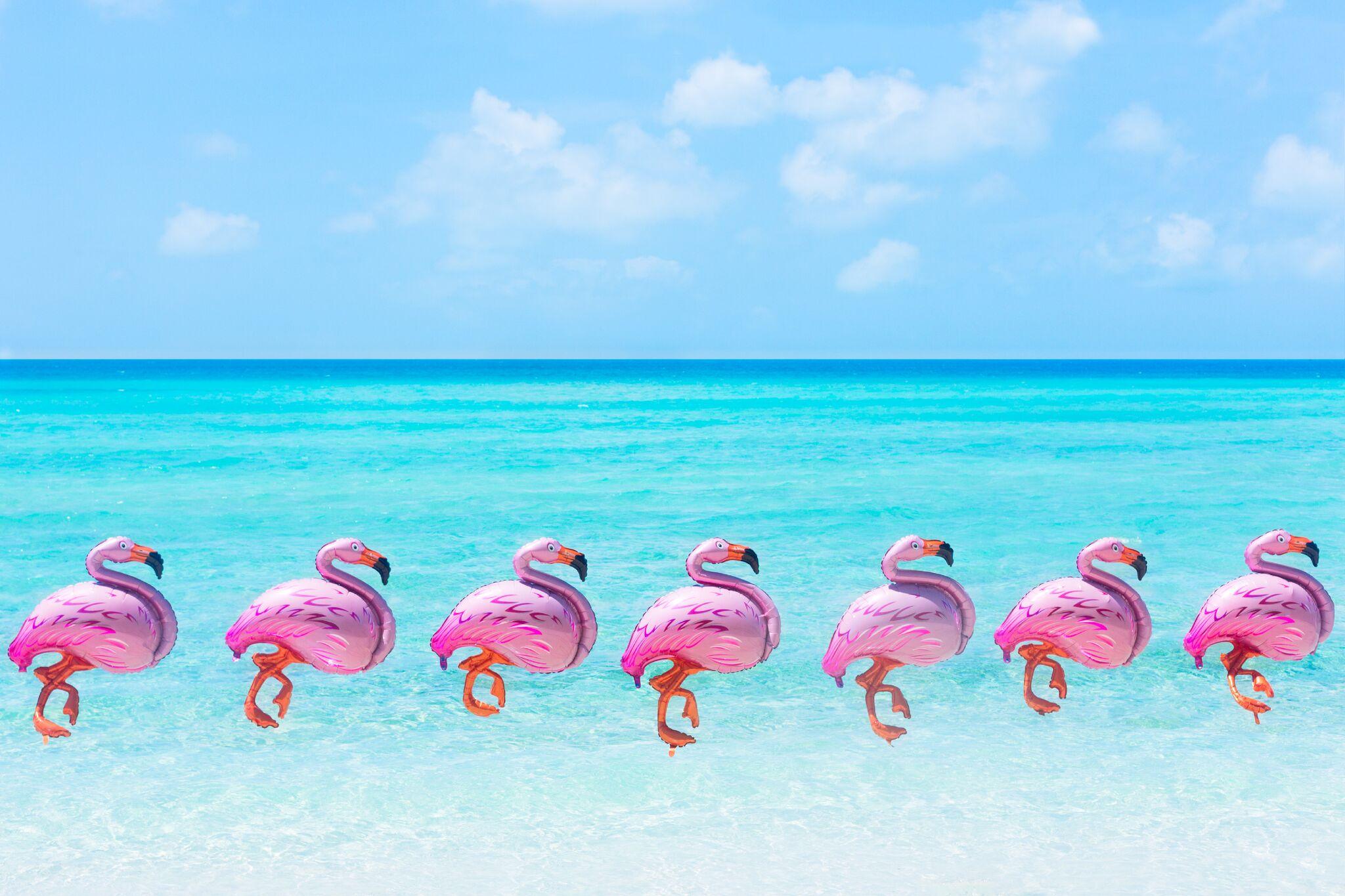 Pink Flamingos love listening to Gray's Summer Playlist