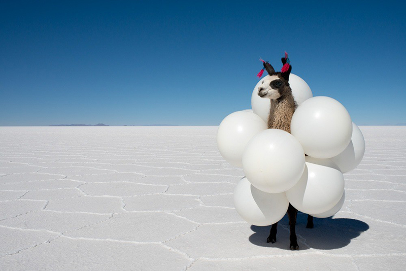 Llama White Balloons print, Gray Malin - See the chicest GM inspired costumes for Halloween