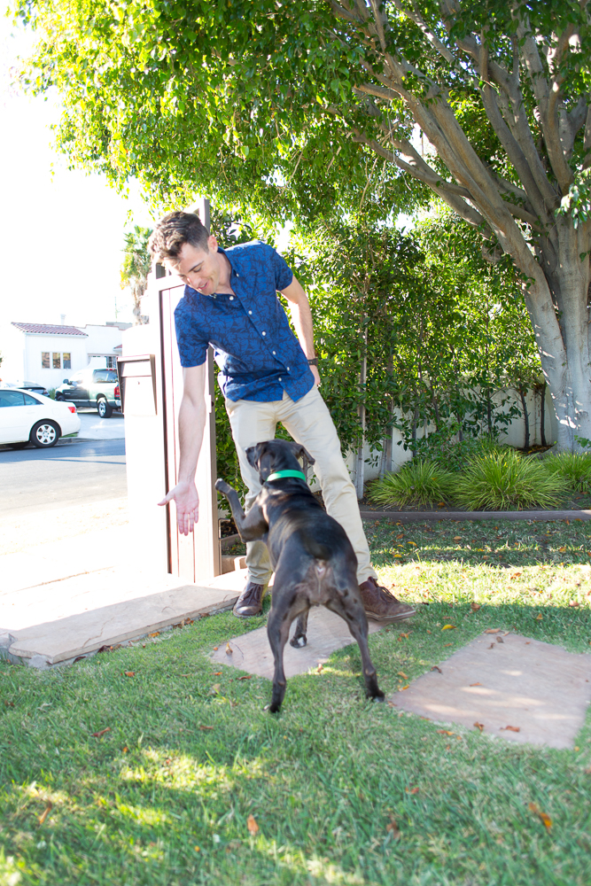 Keep your dog Street Safe with these Dog Training Tips
