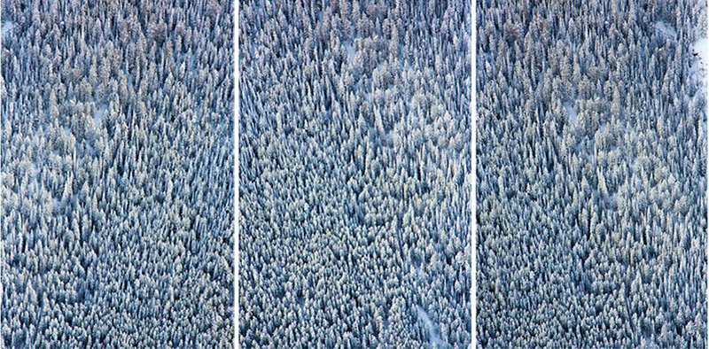 Aspen Trees Triptych | 10 GM Prints that will get you in the holiday spirit