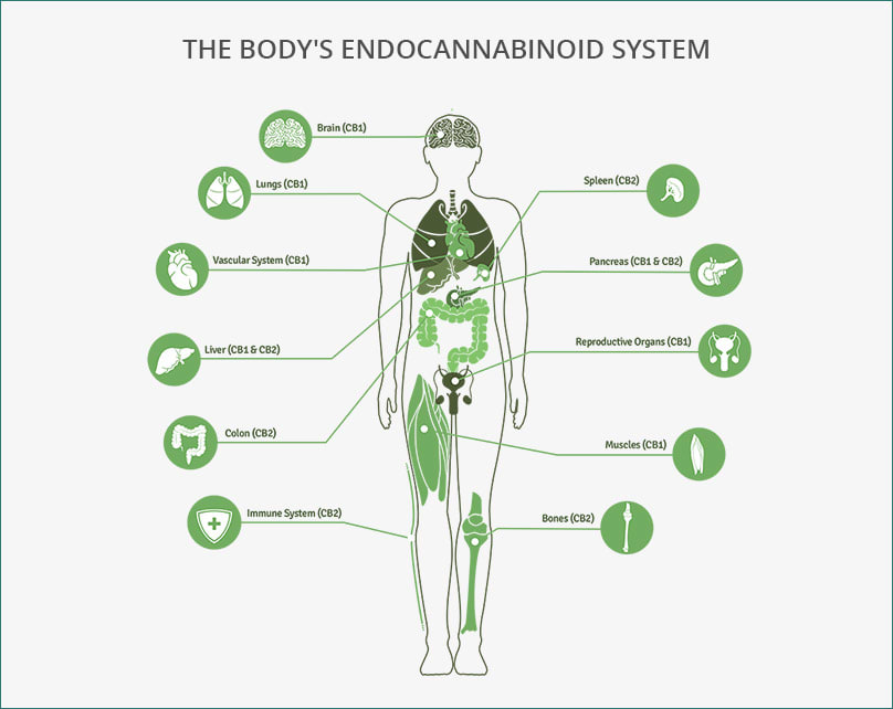 Cannabinoids 101: What are Cannabinoids?