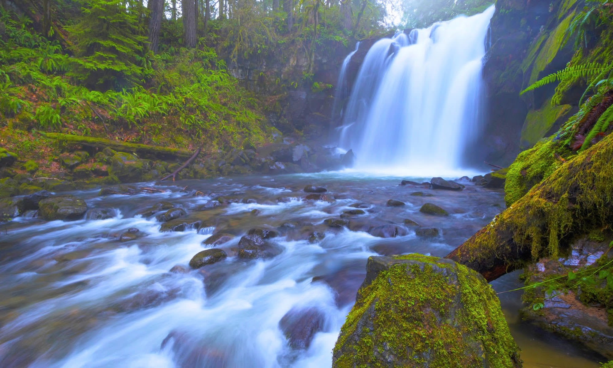 Feeling Blue Craving Some Green? Oregon Parks Are Opening!
