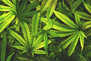 10 Most Common Conditions Medical Cannabis Is Prescribed For