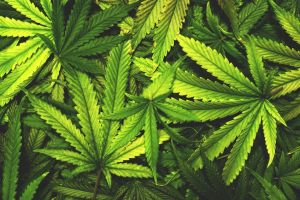 Why Marijuana Makes Your Eyes Bloodshot and 3 Ways to Reduce the Redness