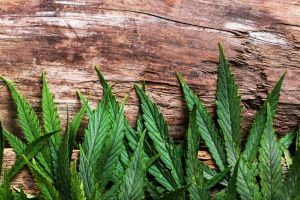 New Study Shows Medical Marijuana Can Decrease Opioid Abuse Nationwide