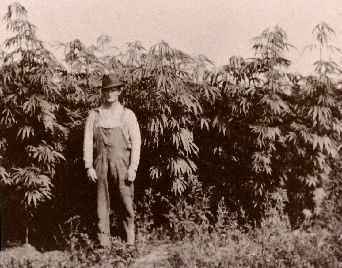 A Little History About Marijuana & Hemp