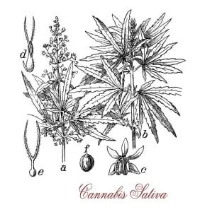 Fun Facts About Marijuana Across the World
