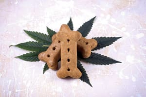 Homemade Hemp CBD Cat & Dog Treats!