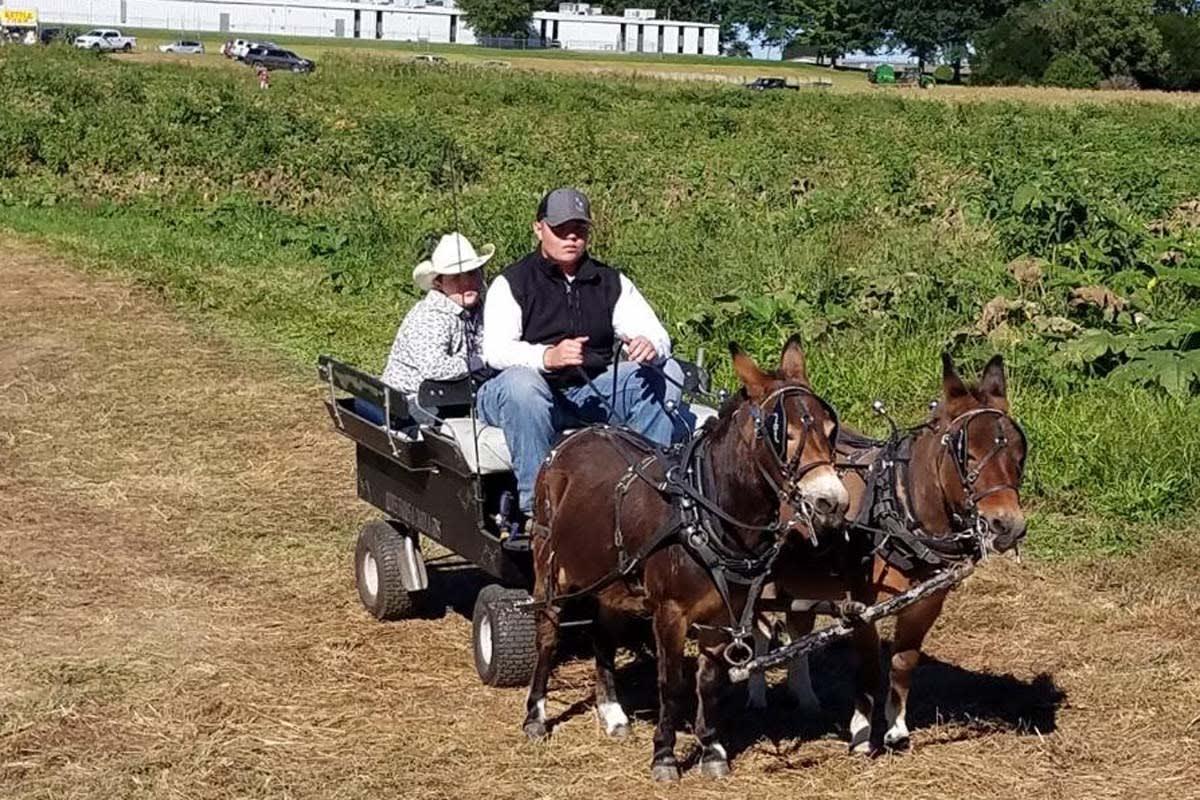 image lewisburg lanterns donkey ride 1200x800
