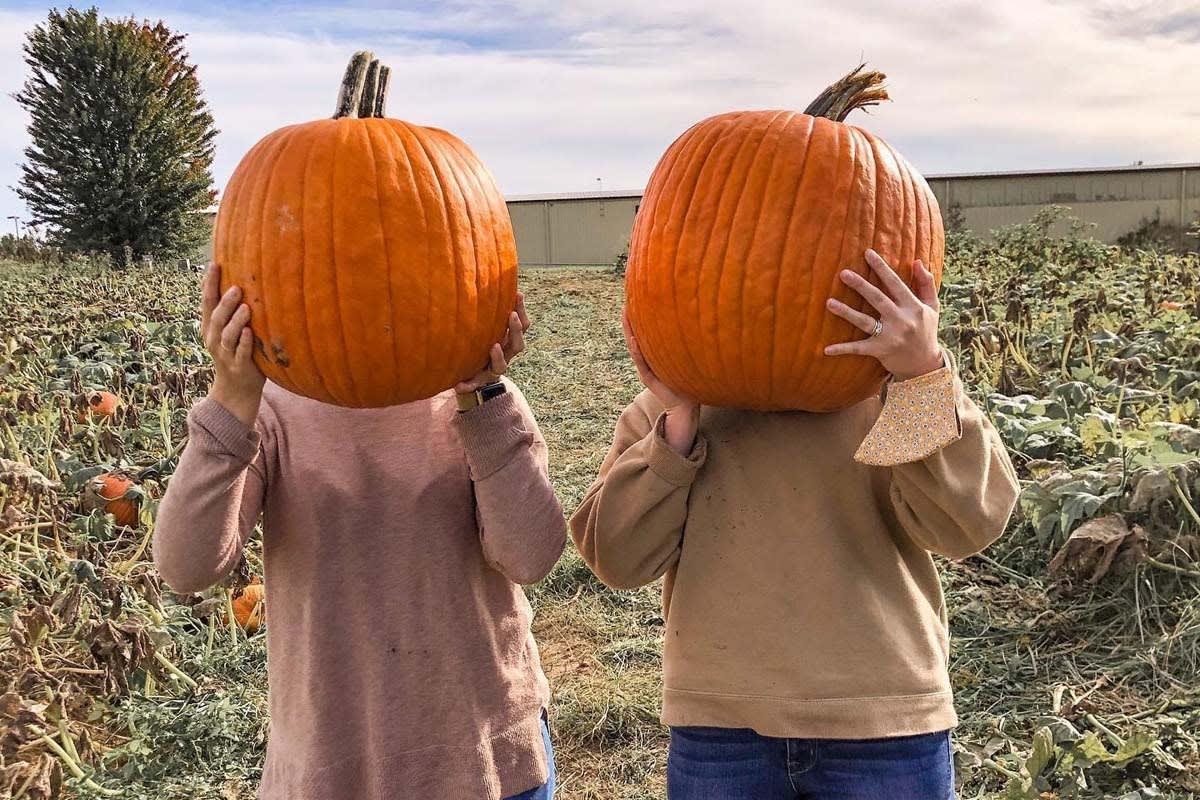 image lewisburg lanterns pumpkin heads 1200x800