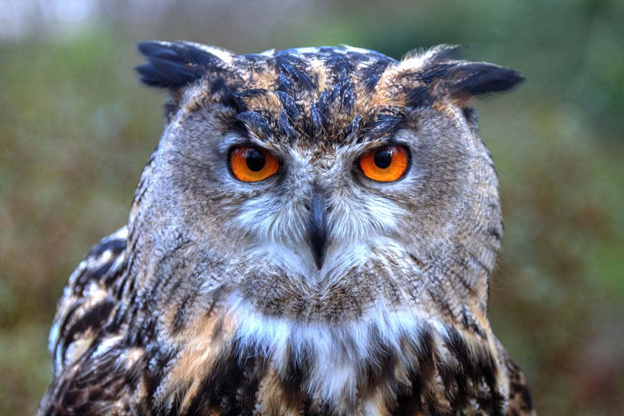 image falconry academy owl 1200x800