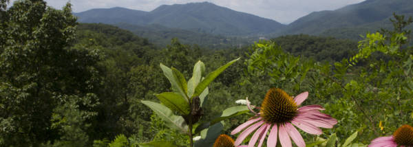 scenic overlook in the greenbrier valley