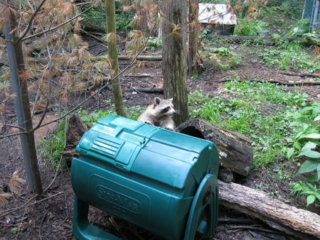 Basic Principles of Composting