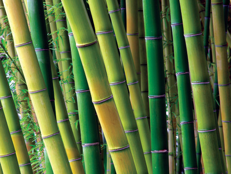 Not All Bamboo Is Created Equal Green Building Supply