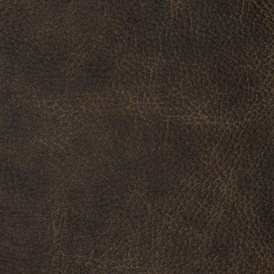 F2096 Bandwagon Fabric