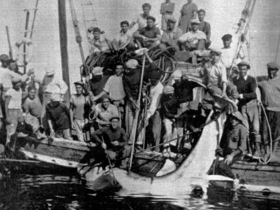 squali - foto storica