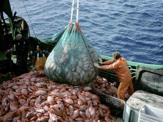 emergenza ittica - proteggere il mare