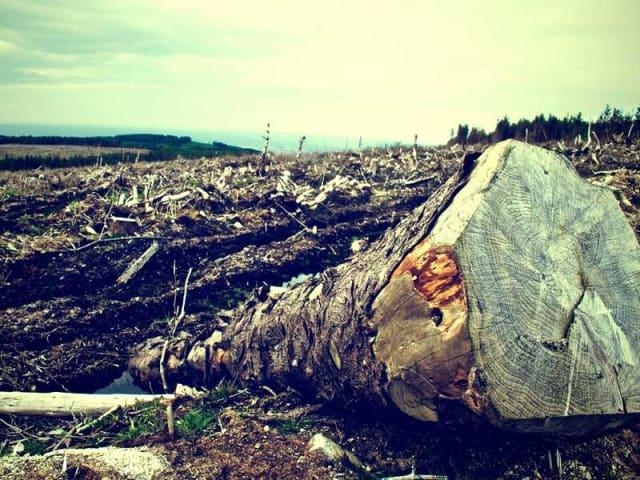 deforestazione - cambiamenti climatici- intelligenza artificiale