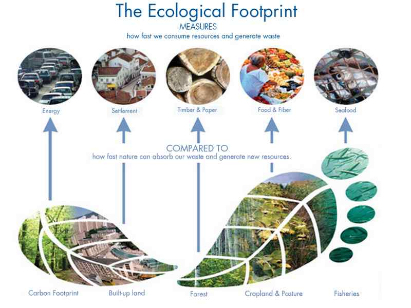 ecological footprint calculator