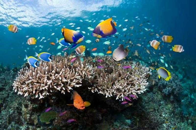 regime shifts negli ecosistemi marini