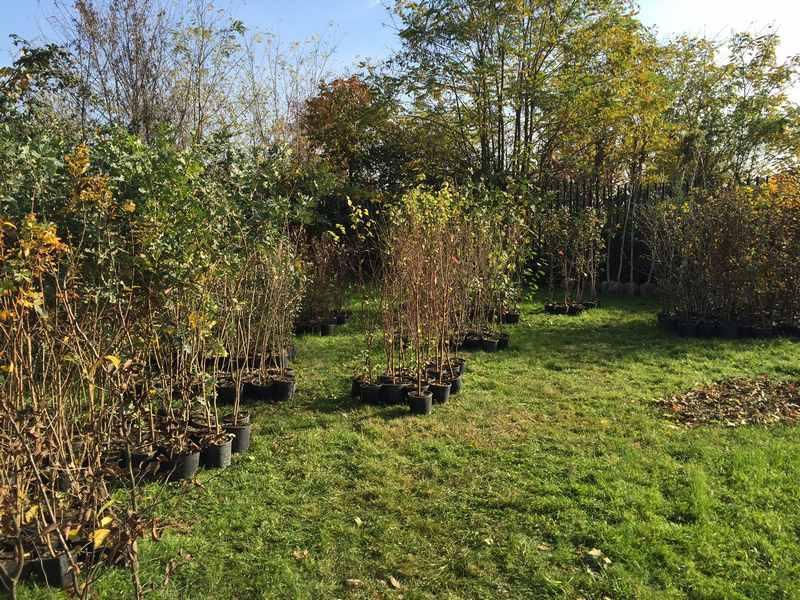 carlsberg italia piantumazione alberi