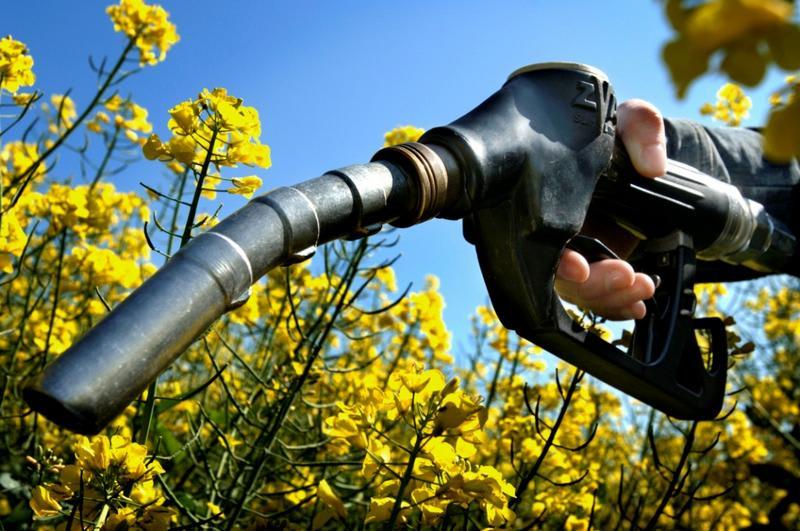 bioetanolo da biomassa