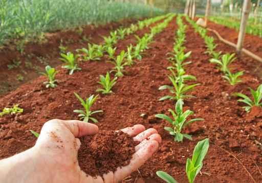 studenti iscritti ad agraria aumentano