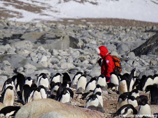 salute dei pinguini