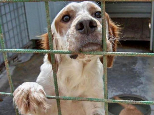 Sacrificato per il nostro bene - test animali