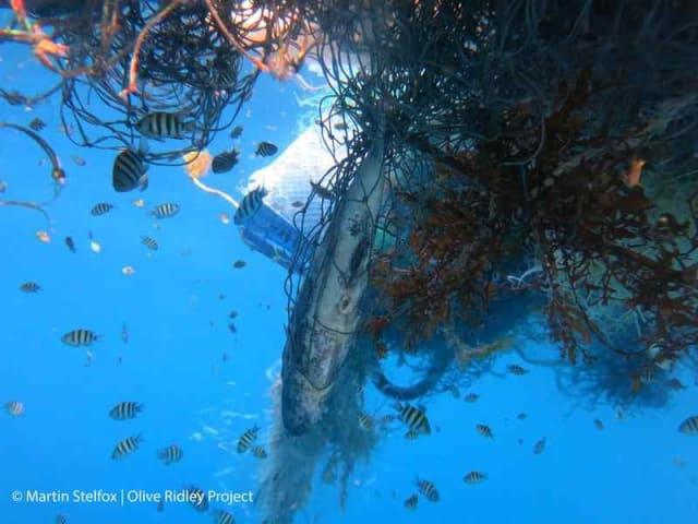 inquinamento da plastica del mare