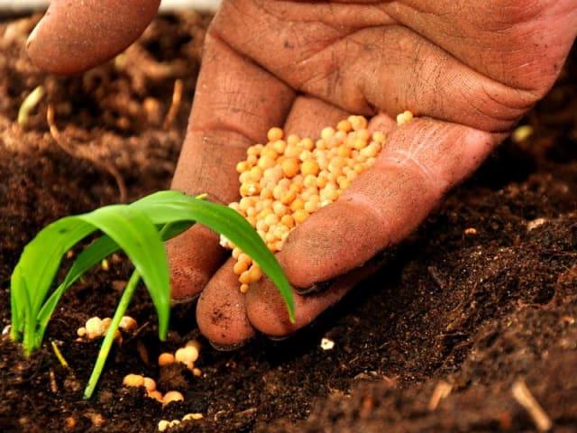 progetto start up bio - agricoltura biologica