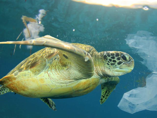 inquinamento plastica mare mediterraneo