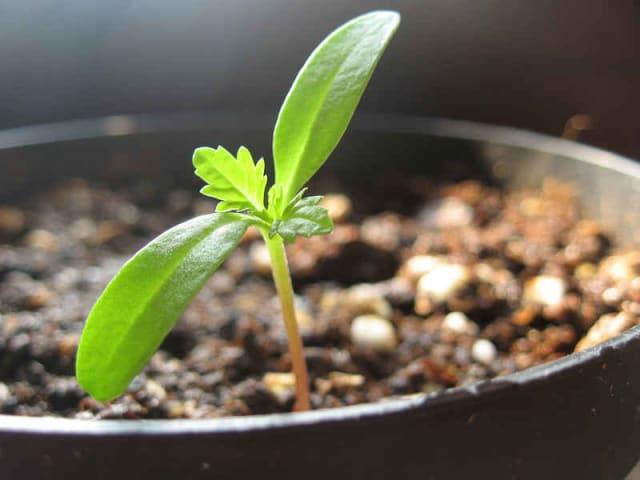 piantate un albero