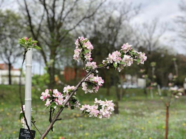giardino condiviso e orto la chiocciola di rho