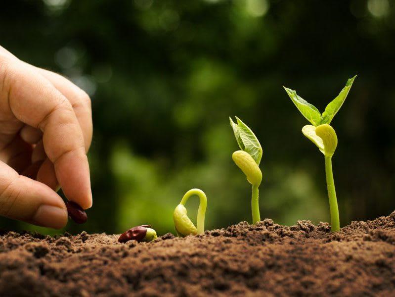 Agricoltura sostenibile: gli ultimi articoli e tutte le informazioni