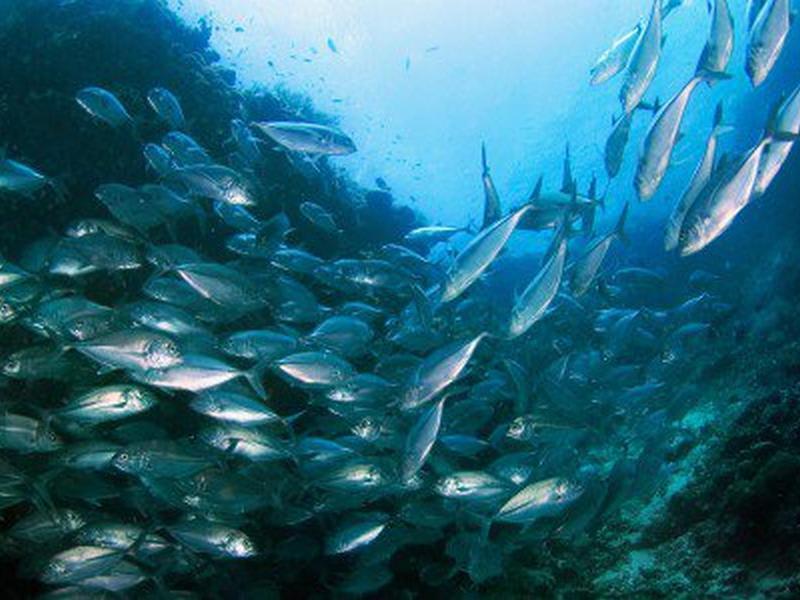 Accordo per protezione, ricerca ambientale e tutela del mare