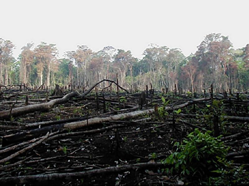 Agras Delic avvia nuovo progetto di riforestazione in Cambogia