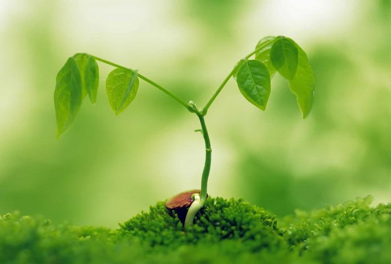 green act