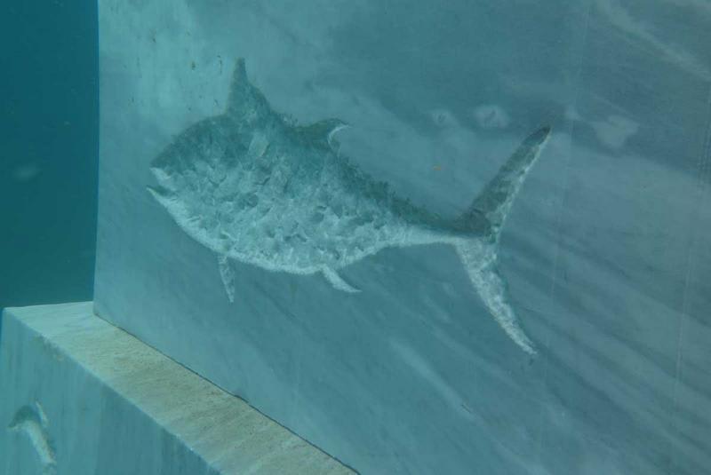 La Casa dei Pesci combatte con l'arte la pesca illegale