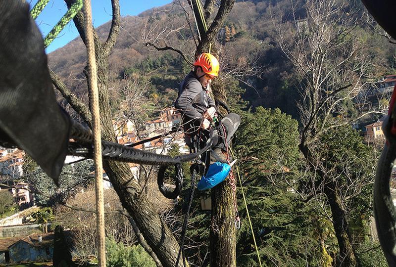 Arboricoltori: i professionisti che curano gli alberi