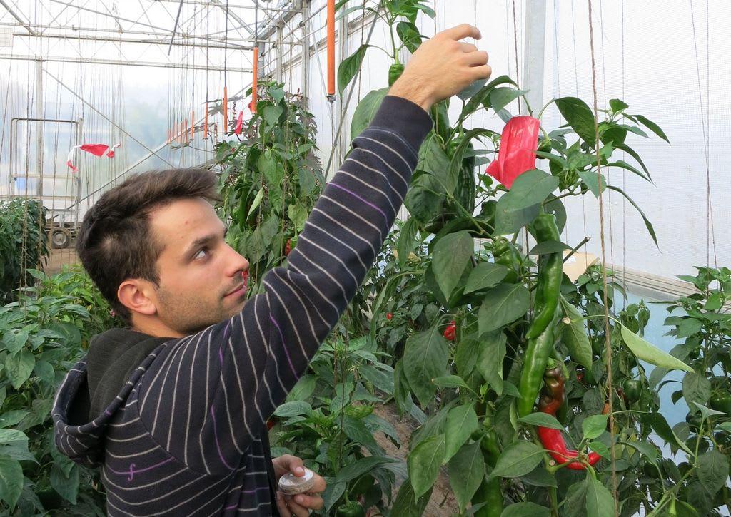 Crisi in Lombardia, sfiorisce il florovivaismo ma resistono gli orti