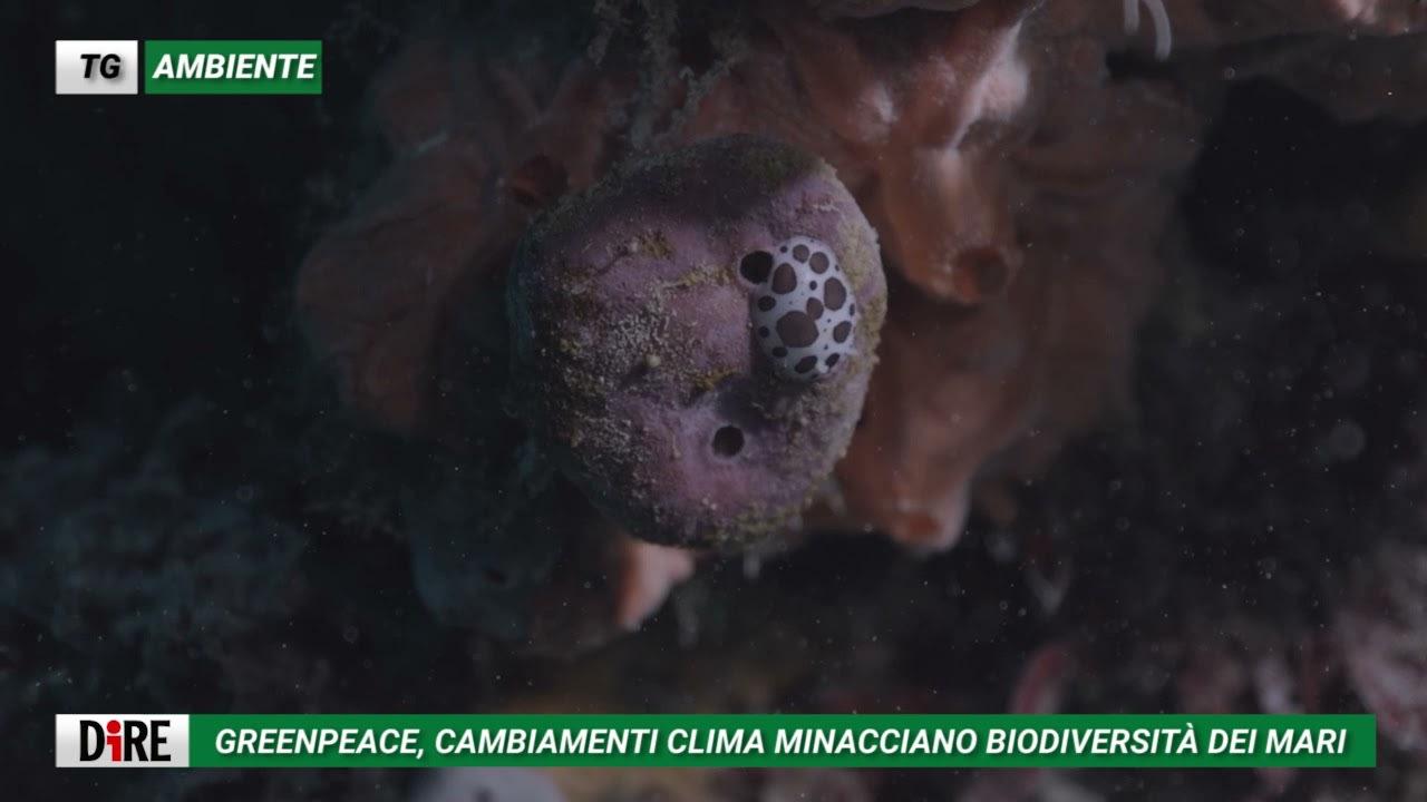 Tg Ambiente di Agenzia Dire del 20 luglio:  la febbre dei mari minaccia la biodiversità