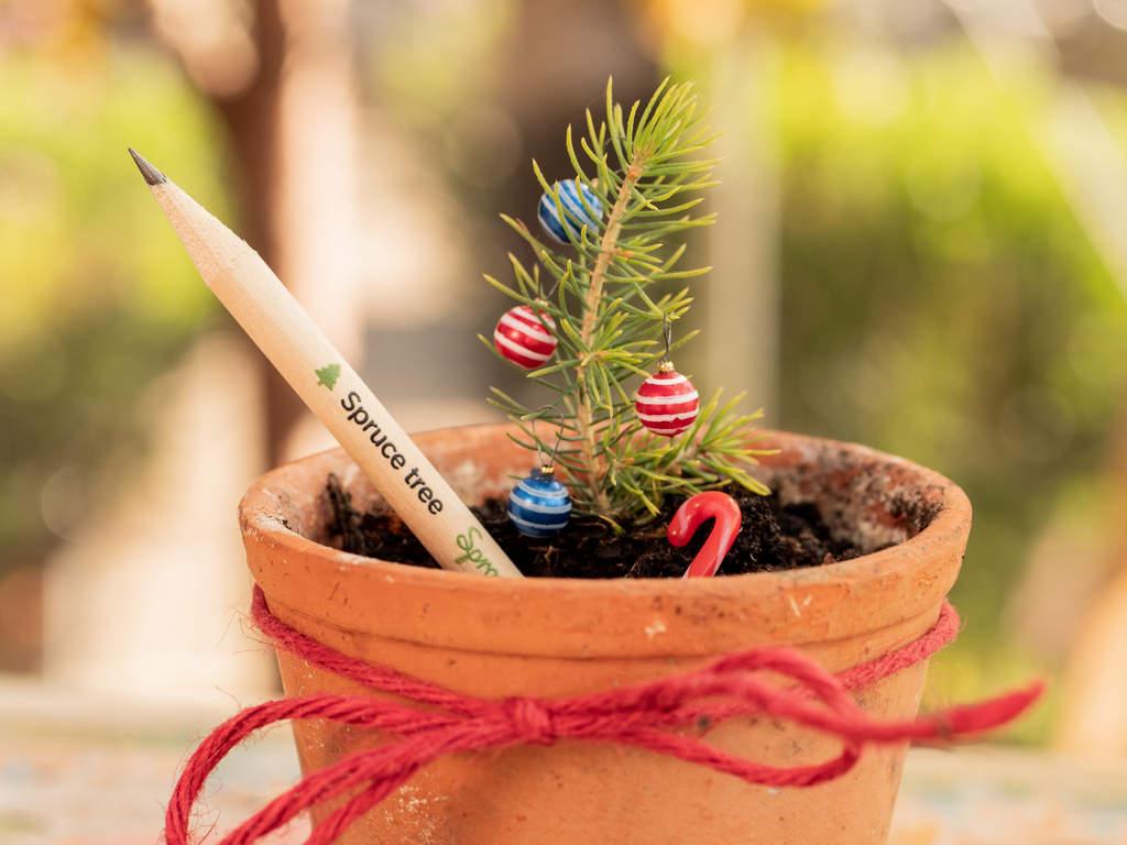 matite piantabili - regali sostenibili