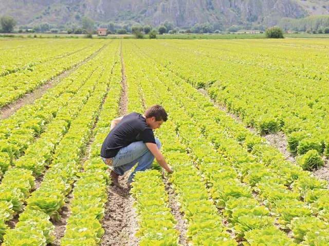 credito giovani agricoltori