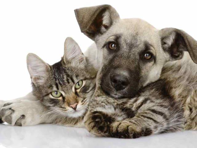 spese veterinarie meno costose