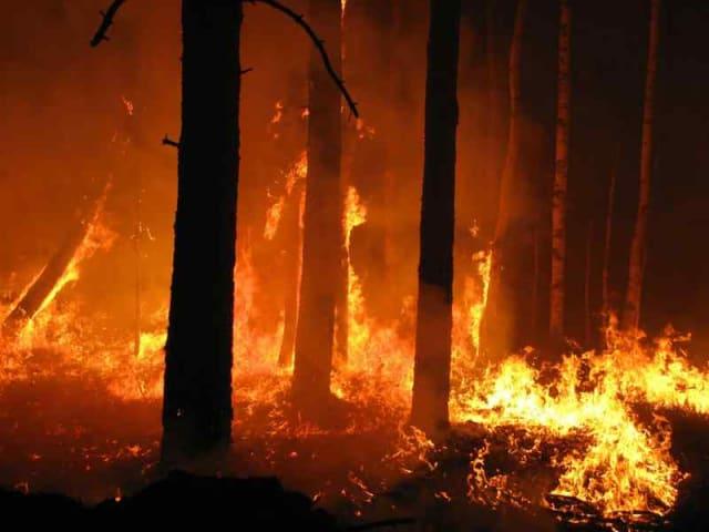 cambiamenti climatici incendi boschivi